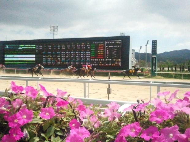 Busan Racecourse winning line