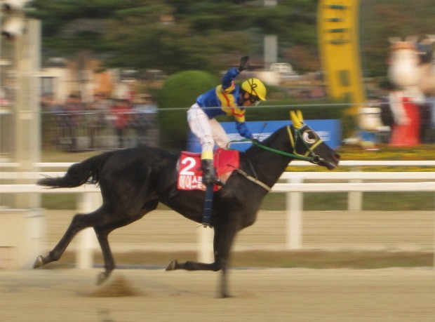 Ace Galloper and Park Tae JOng winning the KRA Cup Classic in 2011 - they partnered on Sunday for the jockey's 1800th career win