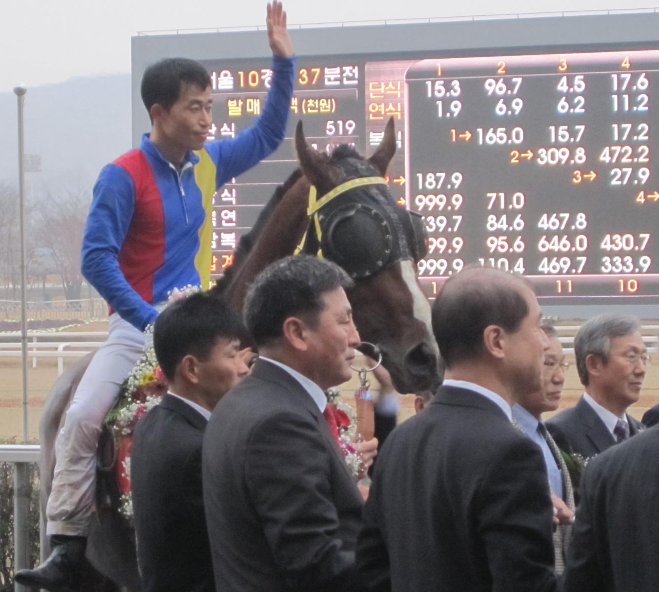 Viva Cat Horse Racing In Korea