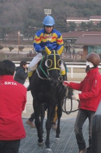Ace Galloper won the KRA Cup Classic last year - he headlines Sunday's marathon card at Seoul