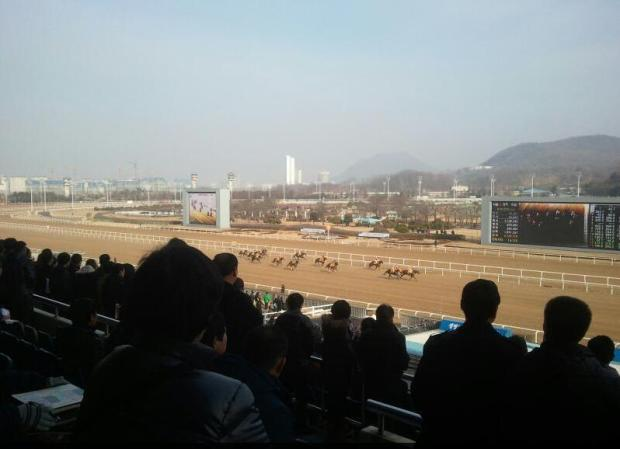 Chilly but bright - Seoul Racecourse, December 16, 2012