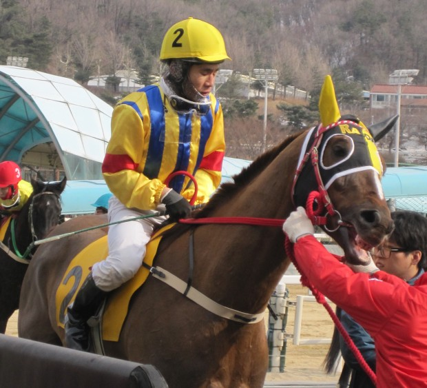 Feel So Good - likely favourite in the Sports Chosun