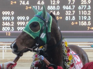 Kkakjaengi won this race 2 years ago and went on to win serious money later