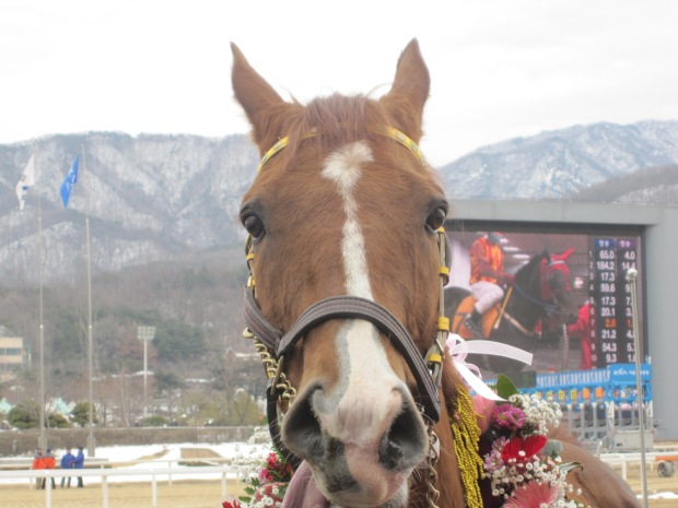 Dongbanui Gangja was in mischievous mood at Seoul Race Park