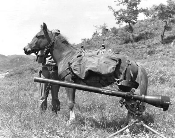 Sgt Reckless in Korea