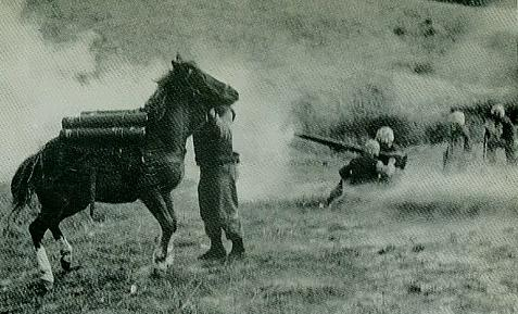 The horse showed bravery in battle