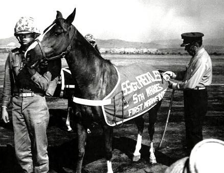 Back at Camp Pendleton, Sgt Reckless was promoted twice