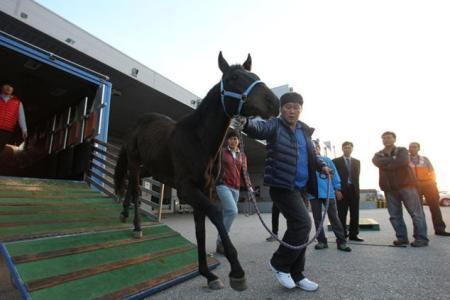 Journey Ends in Winner's Circle - K Pop on his way to export in 2011 (KRA)