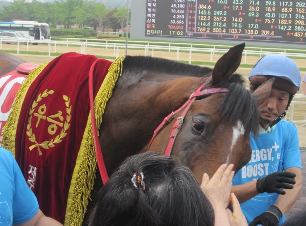 Jigeum I Sungan allows punters to pet him after he won the Jeju Cup. Try doing that with Tough Win or Dongbanui Gangja and they'd have eaten you.