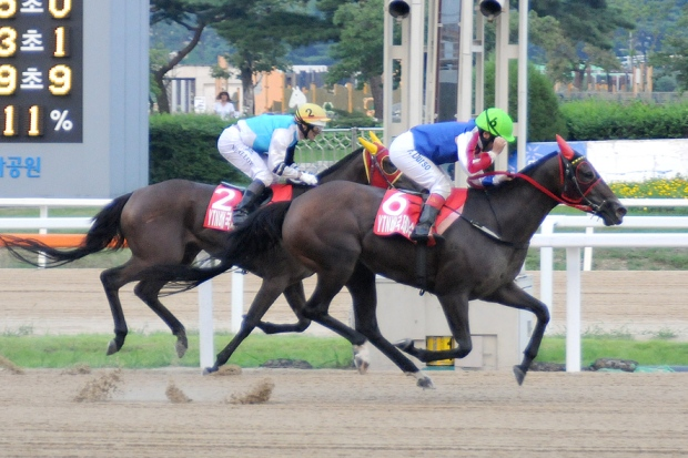 Fausto Durso winning the YTN Cup at Seoul Racecourse in 2013 (Pic: Ross Holburt)