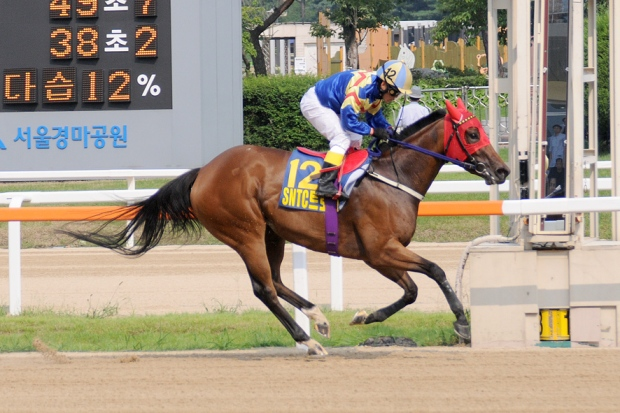 Fly Top Queen is among the Segye Ilbo contenders (Pic: Ross Holburt)