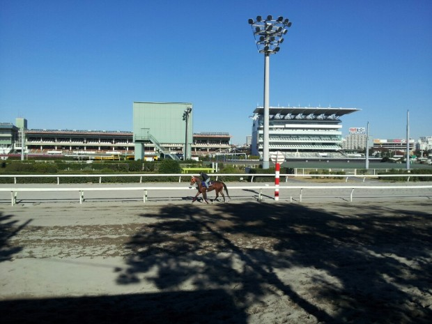 Morning trackwork at Ohi (Pic: Ryu Seung Ho/KRA)