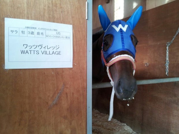 Watts Village in his new box at Ohi (Pic: Ryu Seung Ho/KRA)