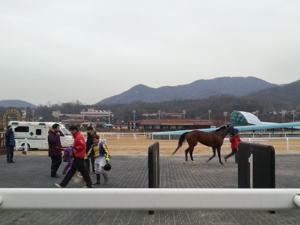 Fly Top Queen is trotted up for the vet after finishing 5th