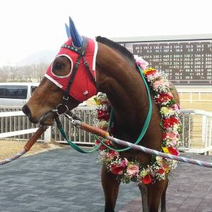 Fly Top Queen was back in the winner's circle
