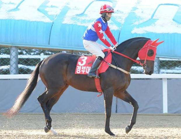 Gyeongbudaero's Grand Prix Stakes win wasn't quite enough to see him to the top of the ratings. He is though, the top Korean bred horse  (Pic: Ross Holburt)