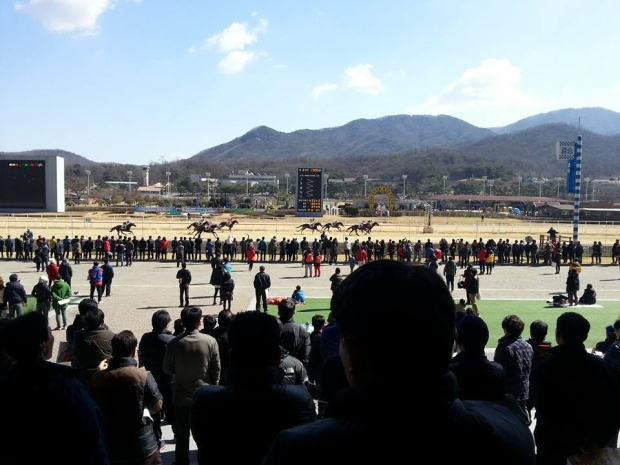 It was a Spring-like weekend at Seoul Racecourse
