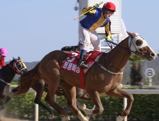 Cheongnyong Bisang wininng the KRA Cup Mile in 2014 under Seo Seung Un (Pic: KRA)