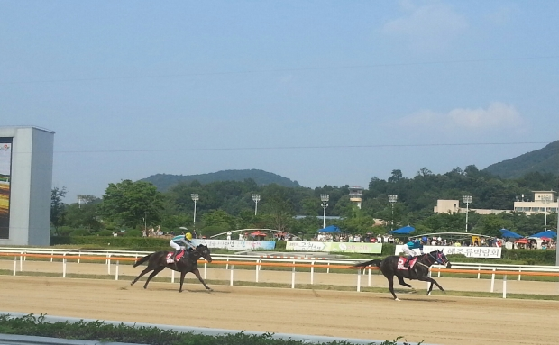 Magic Dancer leads My Winner to the line in the Jeju Governor's Cup