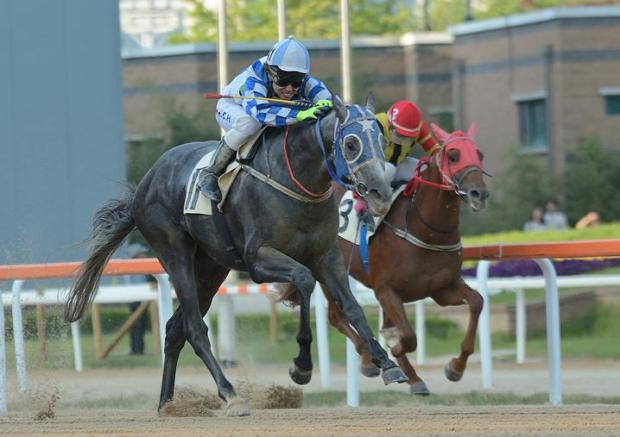 Wonder Bolt is the star attraction at Seoul this weekend (Pic: Elan959)