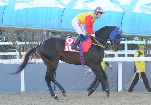 Beolmaui Kkum, seen here at the Grand Prix in Seoul, returned to form at Busan on Saturday (Pic: Ross Holburt)