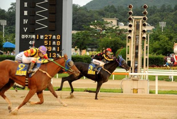 Pinot Noir and Park Hyun Woo win the Horse Racing Ireland Trophy (KRA)