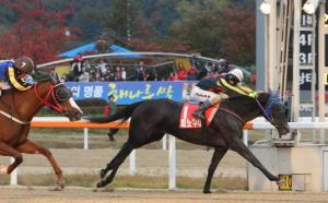 Pinot Noir gets up to beat Cheonnyeon Dongan to win the Gyeonggi Governor's Cup (Pic: KRA)