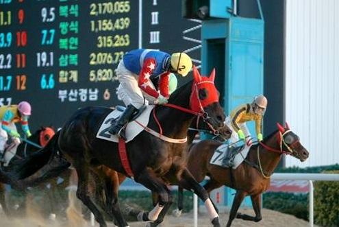 Gyeongbudaero and Choi Si Dae win at Busan on Sunday (Pic: KRA)