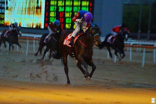 Doraon Hyeonpyo wins the Seoul Breeders' Cup in the gloom last November. Can he win the KRA Cup Mile too? (Pic: choi9036903 blog)
