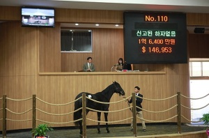 The sale-topping Vicar colt in the ring (Pic: Headline Jeju)