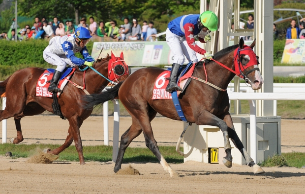 Yeongcheon Ace led Triple Nine home in the Derby (Pic: Ross Holburt)