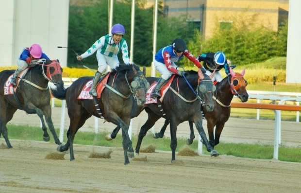 Gumpo Sky (black cap) was just beaten in last year's Minister's Cup. Can he get his first Stakes win in the Busan Ilbo Cup? (Pic: choi9036903)