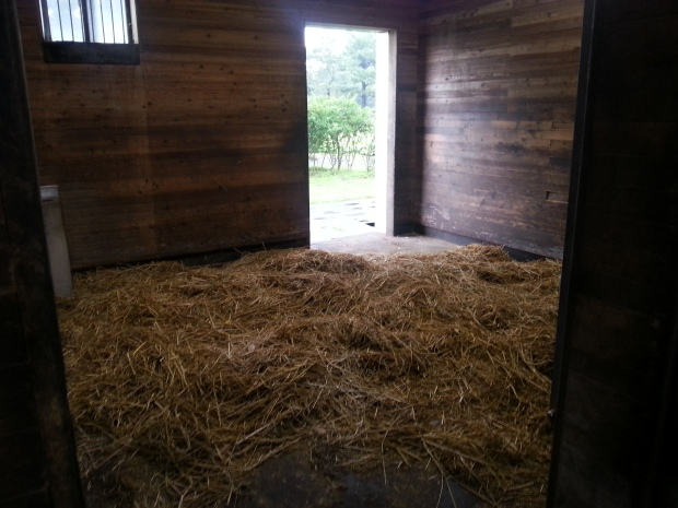Hansen's box at the Stud Farm - he was out in the paddock at the time
