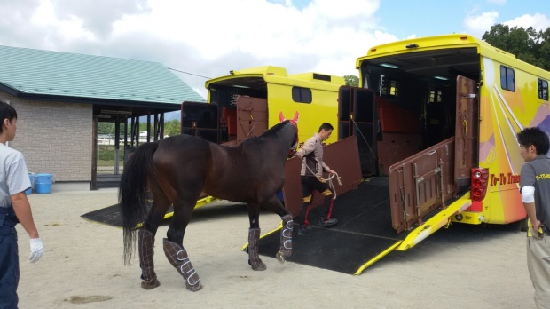 Korea-trained horses are travelling again (Pic: KRA)