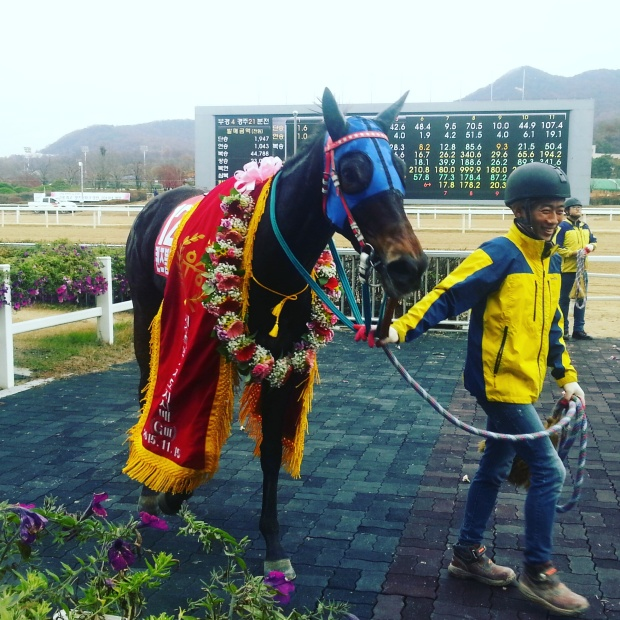 Queen's Blade in the Jeju Governor's Cup winner's circle