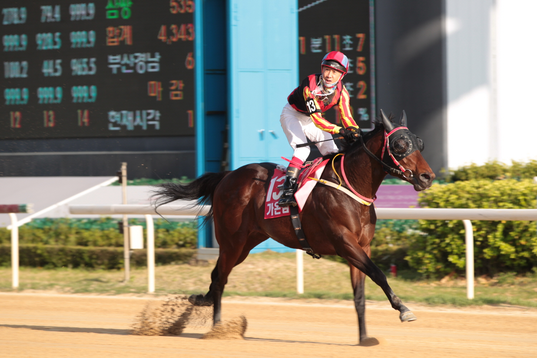 Gaon Champ KRA
